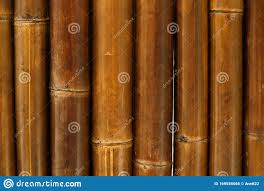 Natural Bamboo Screening Stock Photo Image Of Summer 169556066
