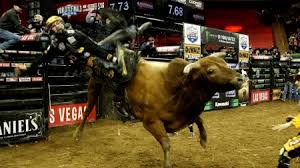 cowboy and bull riding other