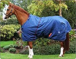 quagga horse pony turnouts le rugs