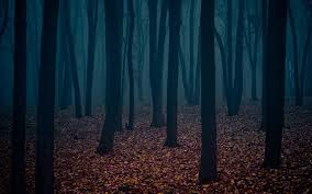 dark forest wallpapers 9q16of2