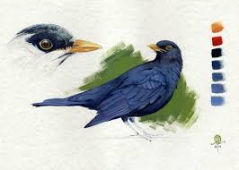 blackbird drawing by cinzia marotta