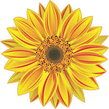 Stickertalk Sunflower Vinyl Sticker 5 Inches X 5 Inches Stickertalk