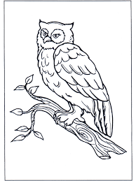 Uil Op Tak Kleurplaten Vogels