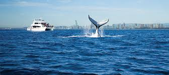 holiday packages deals to sea world