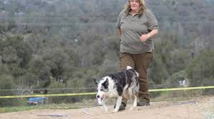 Volunteers, search dogs attempt to locate more bones at Chukchansi gas  station site | Sierra Star