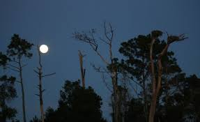 The full moon, by Adeline Perry - Picture of On The Wind Sailing Cruises,  New Bern - Tripadvisor