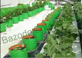 grow bags organic kitchen garden grow