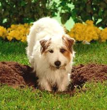 How To Break Your Dog From Digging