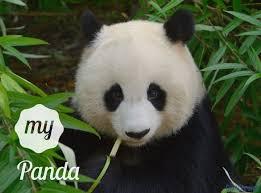 pandas bears wallpapers 2 16 32 crx