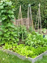 vegetable patch design rescar