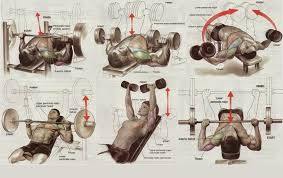 best chest workout routine project next