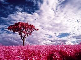 صور الطبيعة الخلابة اجمل الصور لمناظر طبيعية صوري