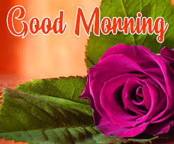 flowers love good morning images pics
