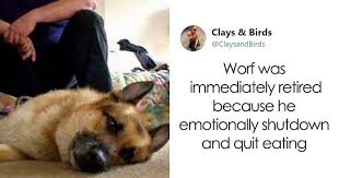 person honors the dog heroes of that are often overlooked in