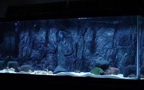 pictures images and photos diy aquarium