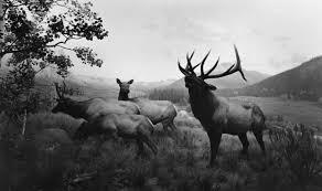 hiroshi sugimoto nature s deer