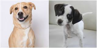 Cutest Mixed-Breed Dogs You Can Adopt ...