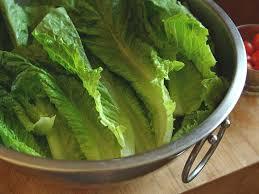 romaine lettuce nutrition calories