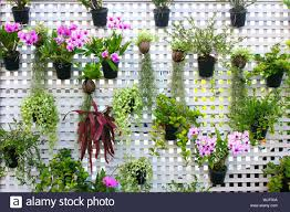 Potted Plants Hanging On Fence Stock Photo Alamy
