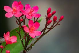 صور ورد جميل شاهد اجمل صور الورد رمزيات