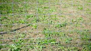 Farmgard 47 In X 330 Ft Field Fence With Galvanized Steel Class 1 Coating 348106b The Home Depot
