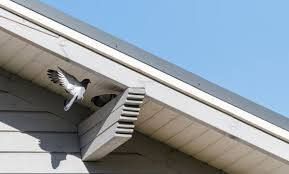 5 home remes to keep birds away