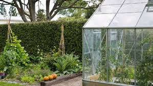greenhouse what you can grow in it