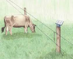 Electric Fencing Basics In 2020 Electric Fence Electricity Fence