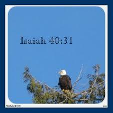 American Bald Eagle Wall Decal Isaiah 40 31 Bald Eagle American Bald Eagle Eagle