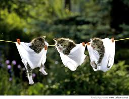 funny hd wallpaper with cats