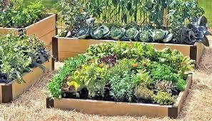 raised garden bed cover snapshots