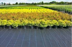 weed control barrier pp woven fabric
