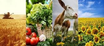 Экспортные достижения сельского хозяйства России в 2017 г.» в ...