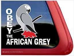 Amazon Com Nickerstickers Obey The African Grey Parrot Bird Vinyl Window Decal Automotive