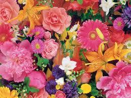 صور ورود جميلة اجمل صور الورد والازهار بجودة Hd سوبر كايرو