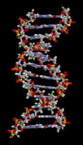 La Corte Suprema de los EE.UU prohíbe patentar ADN humano. | ¿De ...