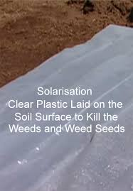 how to sterilise to kill weeds