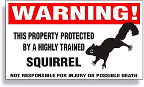 Amazon Com Warning Decal Property Protected By A Highly Trained Squirrel For Gray Black Brown Flying Ground Tree Squirrel Bumper Fence Or Window Sticker 5 75 X 3 25 Inch Black Sillhouette Automotive