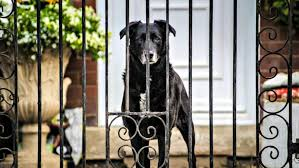 What You Need To Know About Electric Dog Fencing Angie S List