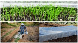 how to use garden fabric or covers