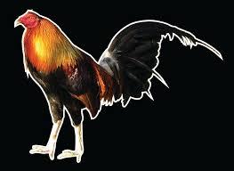 Colorado Chicken Vinyl Decal Sticker Auto Automotive Outdoor Hen Rooster Chick For Sale Online Ebay