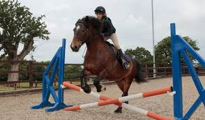 Jumping Small Fences Horseriding Org Uk