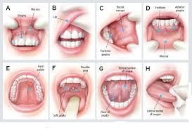 major signs of herpes symptoms