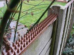 Geezy 10 Piece Anti Climb Fence Wall Spikes Burglars Cats Birds Repellent Deterrent 5 Meters Amazon Co Uk Garden Outdoors