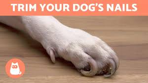 how to trim your dog s nails at home