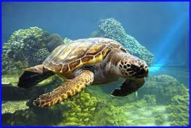 Amazon Com Loggerhead Sea Turtle Swims In Ocean Etched Vinyl Stained Glass Film Static Cling Window Decal Home Kitchen