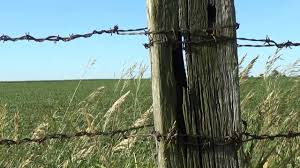 Barb Wire Fence Old Fence Posts Illinois Pasture And Bird Song Youtube