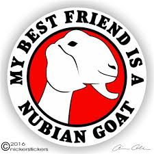 Nubian Goat Stickers Decals Nickerstickers