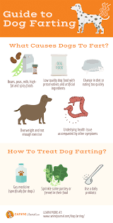 dog ing causes and ways to remedy