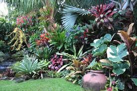 dennis hundscheidt tropical garden